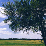 Common Ohio trees — Do you know what's growing in your yard?
