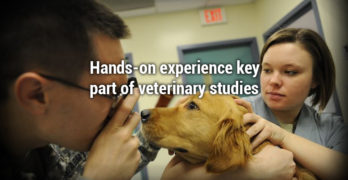 Hands-on experience key part of veterinary studies