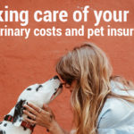 Taking care of your pet – Veterinary costs and pet insurance